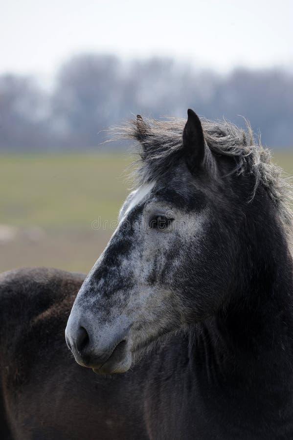 серая лошадь стоковое изображение