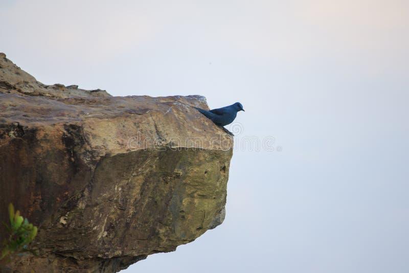 Серая птица на высокой скале стоковые фотографии rf