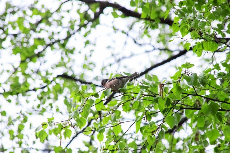 Серая птица сидит на дереве стоковые изображения rf