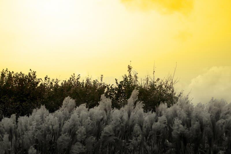 Серая трава и золотой заход солнца стоковые фотографии rf