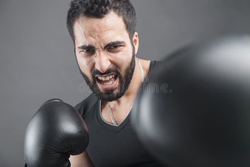 Сердитый боксер стоковое фото