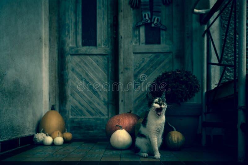 Сердитый кот реветь при ампутированная нога сидя парадным входом украшенным с тыквами на сезон хеллоуина Темный пугающий хеллоуин стоковое изображение