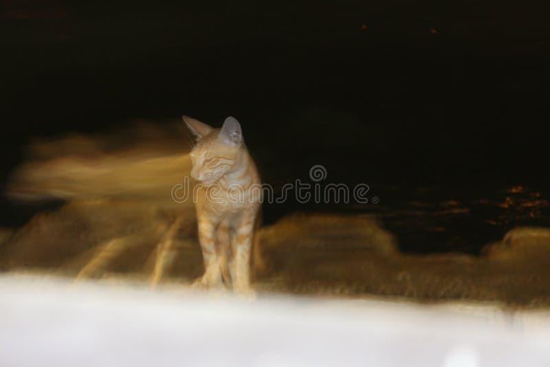 Сердитый кот стоковая фотография rf