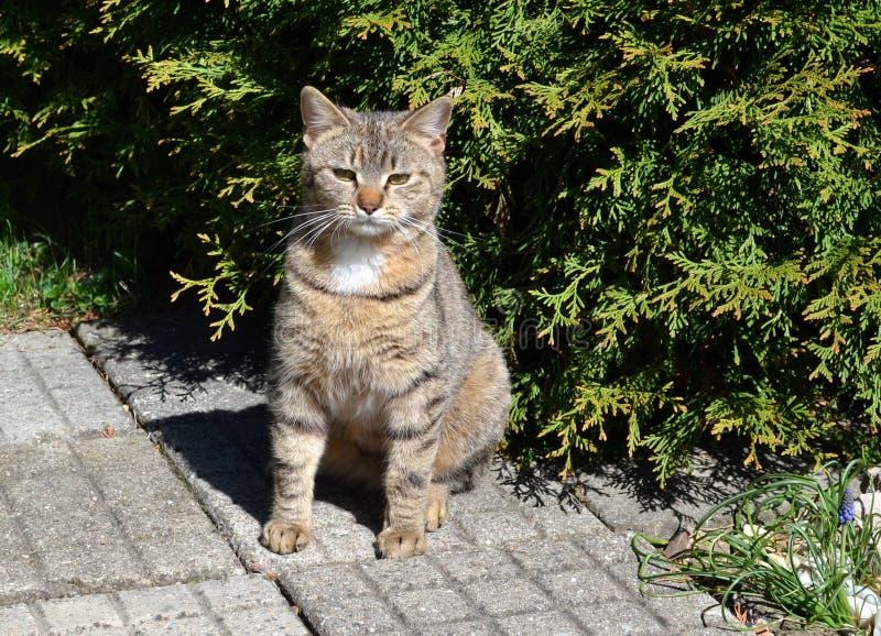 Сердитый кот tabby сидя в саде стоковое фото rf