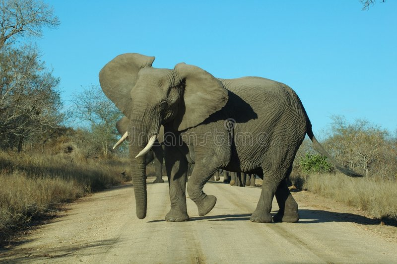 Download сердитый слон стоковое изображение. изображение насчитывающей анимизма - 650457
