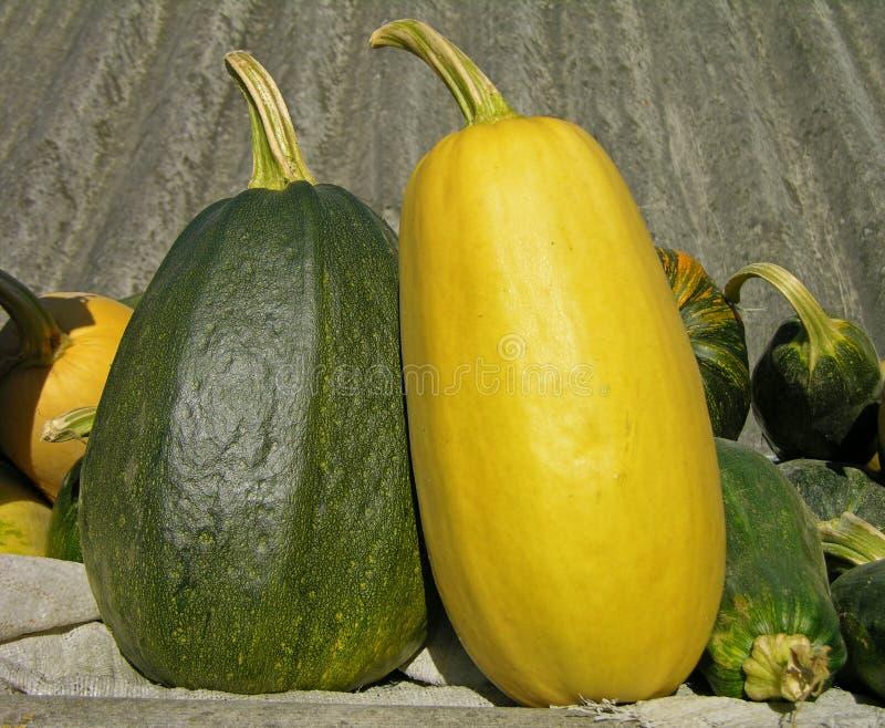сердцевины vegetable стоковое изображение