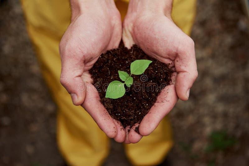 Сердцеподобные формы Менсы держат землю за руки, а растение в середине мало стоковые изображения rf