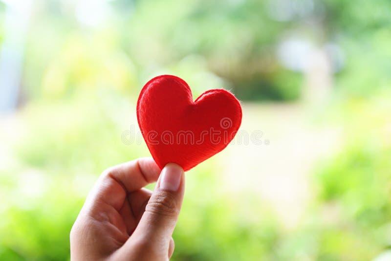 Сердце в наличии для концепции филантропии - женщины держа красное сердце в руках на день Святого Валентина или подарить для того стоковая фотография rf