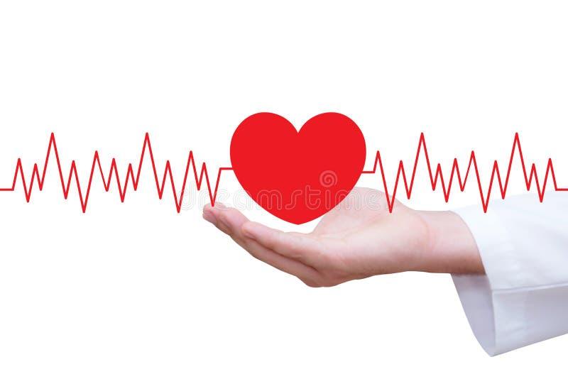 Сердце диаграммы красное с сердцем держа рука стоковые фотографии rf