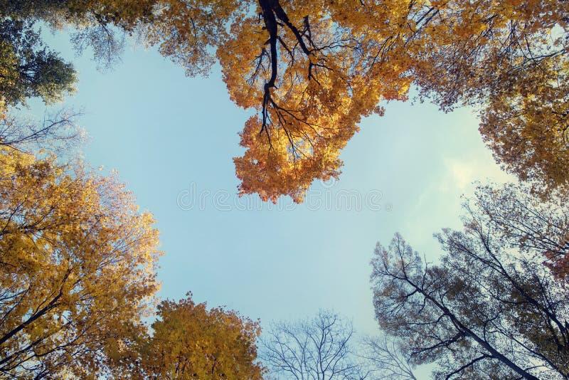 Сердце окружено осенними деревьями стоковое фото rf