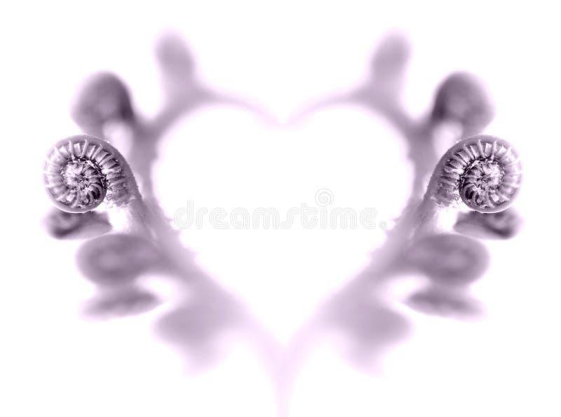 Сердце папоротников стоковые изображения rf