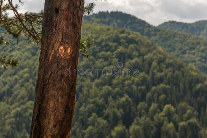 Сердце природы стоковая фотография