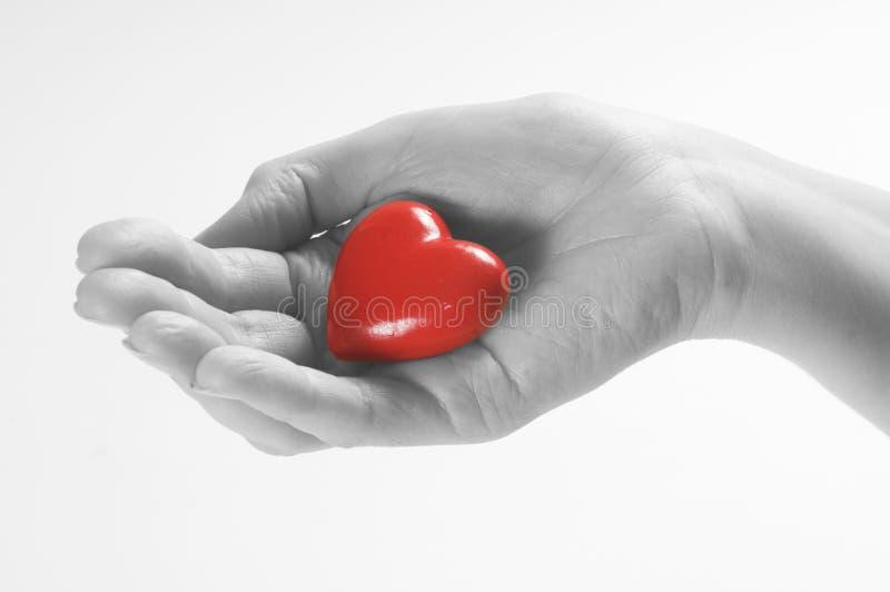 сердце руки стоковое изображение rf
