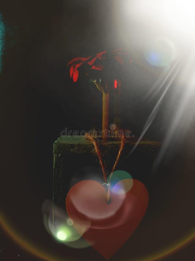 Сердце цветка стоковые изображения