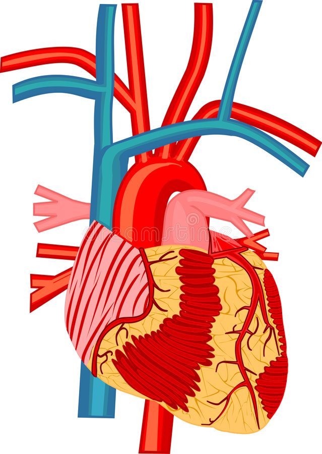 сердце бесплатная иллюстрация