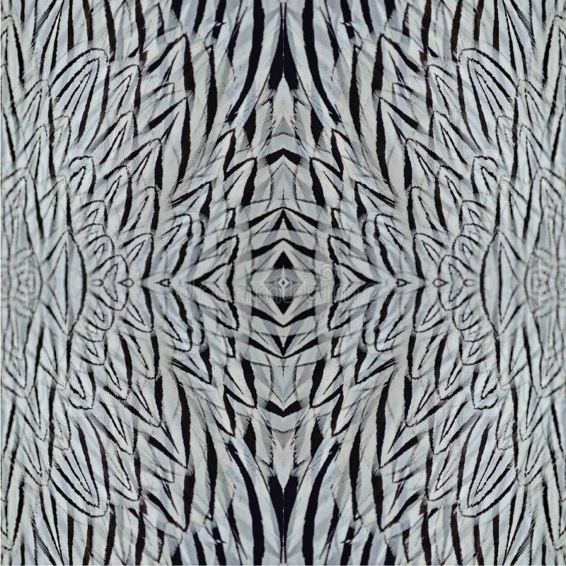 Download Серебряные пер фазана стоковое фото. изображение насчитывающей пер - 40582138
