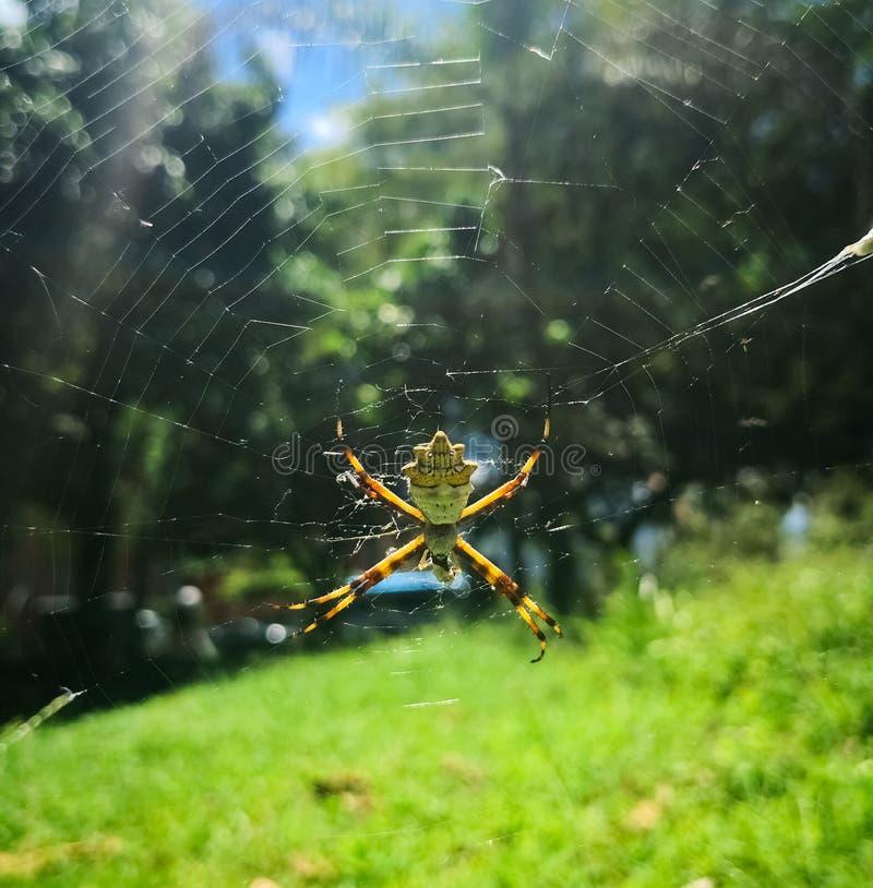 Серебряный паук в солнечном дне на парке стоковое фото rf