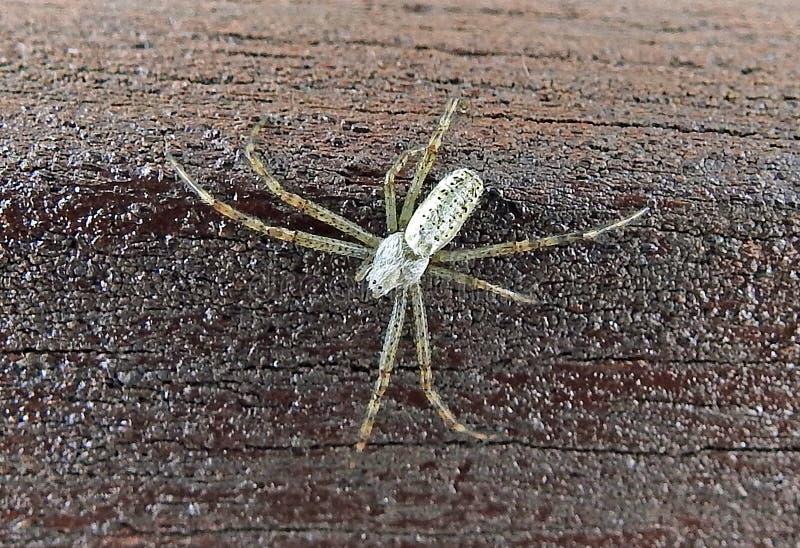 Серебряный паук стоковое изображение