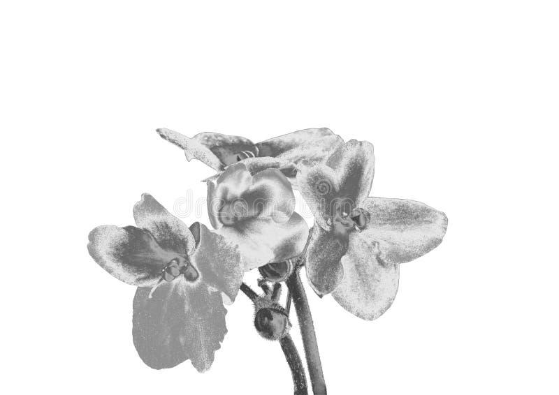 Серебряный цветок стоковая фотография