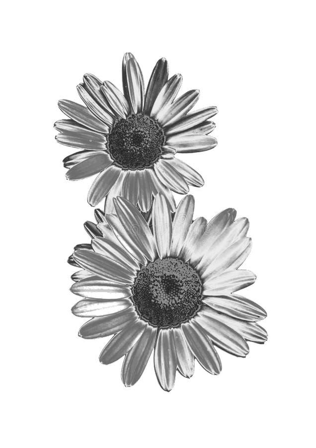 Серебряный цветок стоковое фото rf