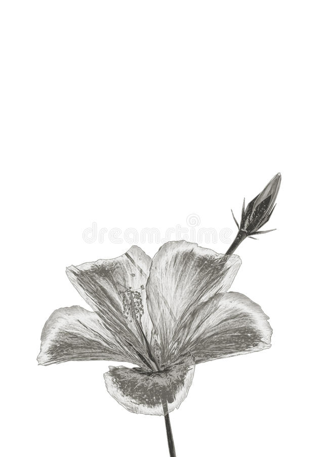 Серебряный цветок бесплатная иллюстрация