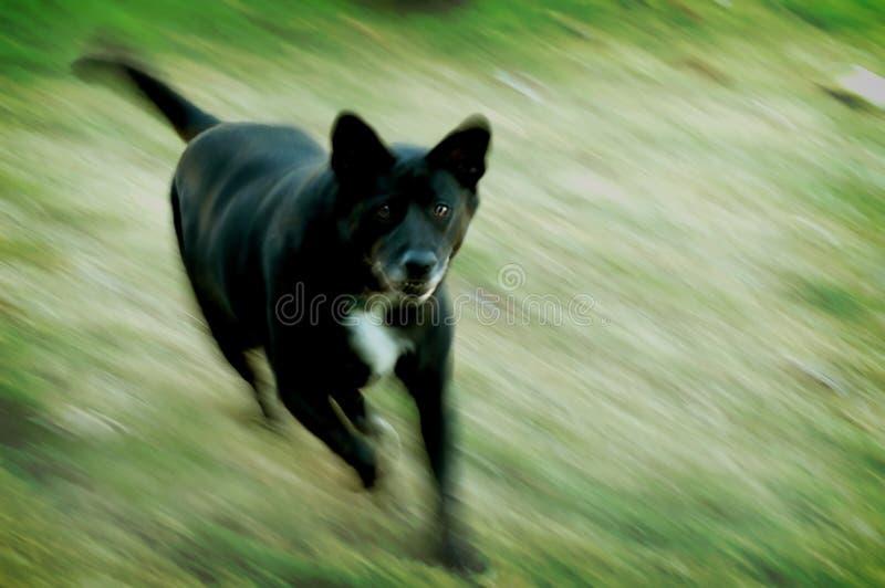 середина собаки