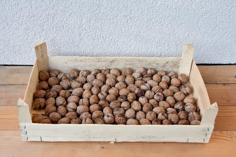 Серии грецких орехов в коробке переклейки стоковые изображения rf