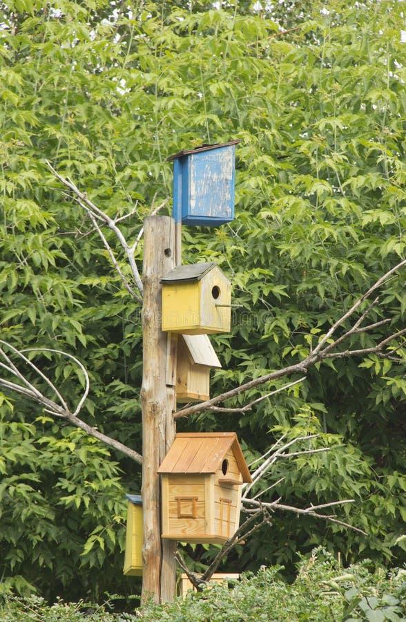 Серии красочных деревянных birdhouses на дереве стоковые фотографии rf