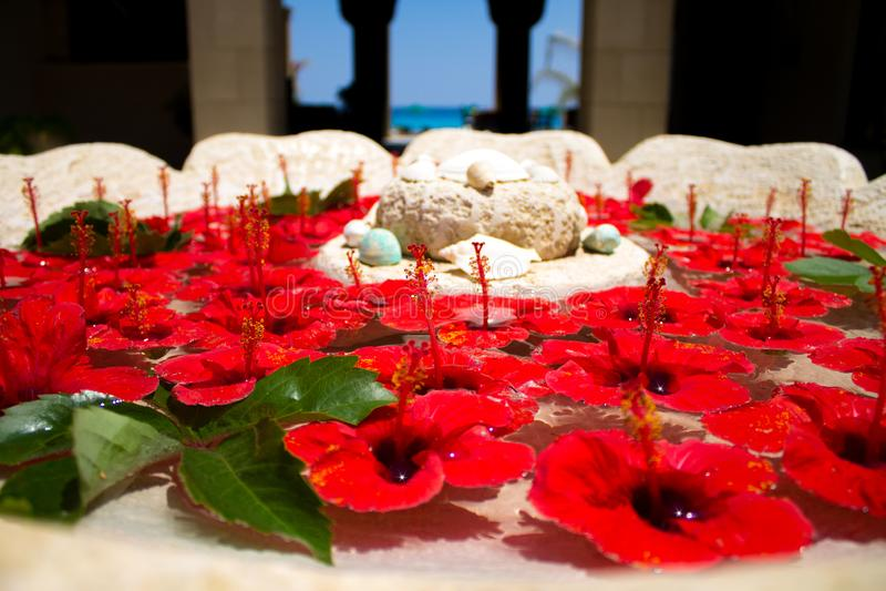 Серии ярких красных цветков бутонов гибискуса и зеленых листьев плавая в чистую воду в каменной вазе стоковое изображение rf