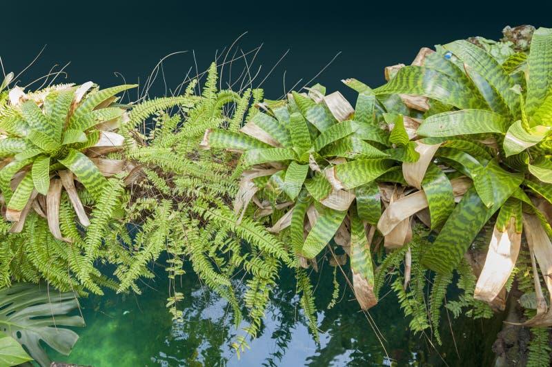 Серии bromeliads стоковое фото rf