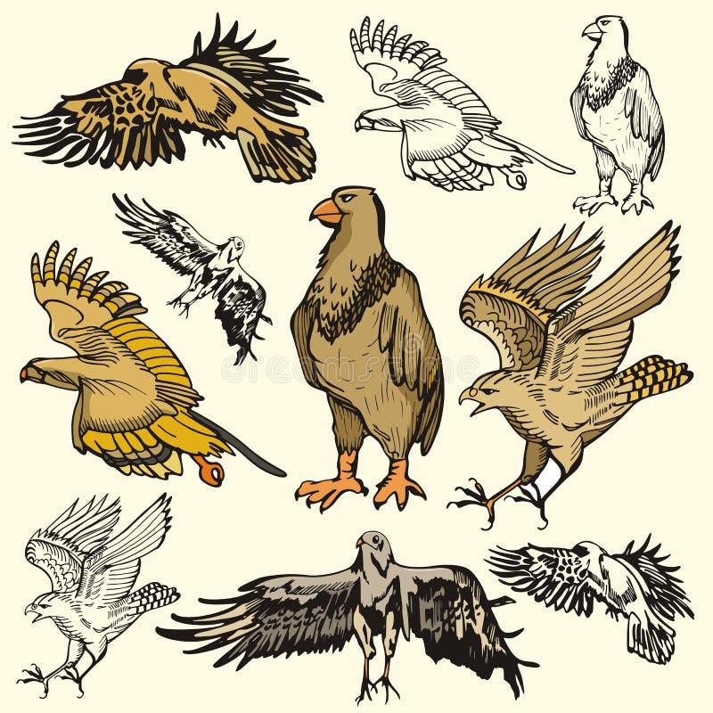 серия иллюстрации птицы бесплатная иллюстрация
