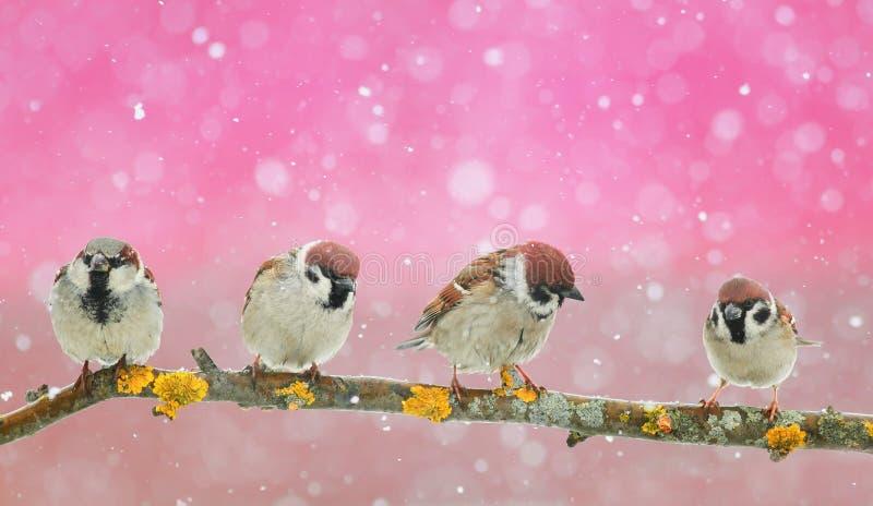 Download серия смешных маленьких птиц сидя в красивом равенстве рождества Стоковое Фото - изображение: 104856854