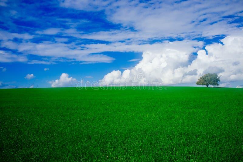 Серия Holyland - равнина дуба Manasseh (Ramot Manasseh) #1 стоковая фотография