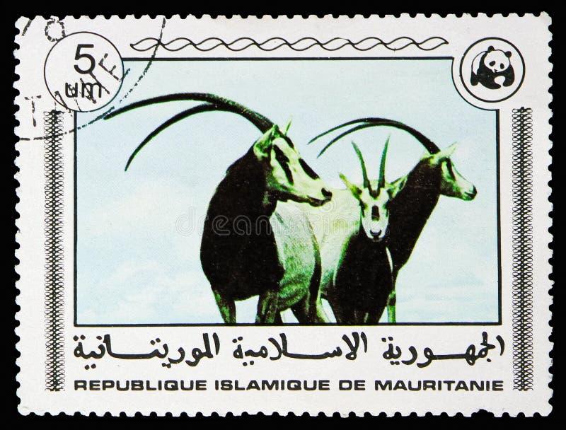 Сернобык, всемирное serie фондом, около 1978 стоковое фото rf