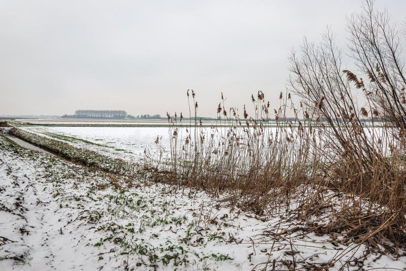 Серое небо снега над снежным голландским ландшафтом польдера в сезоне зимы стоковые фото