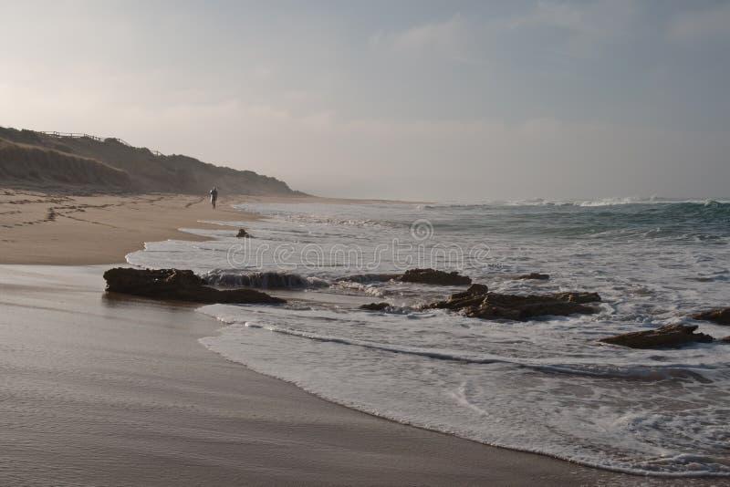 Серфер в сумраке утра стоковое изображение rf