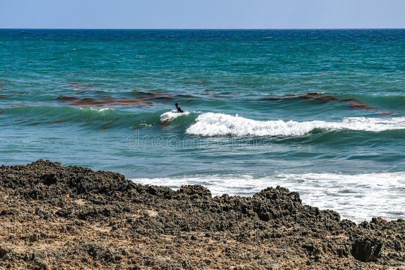 Серфер и засоритель моря плавая на волны стоковое фото