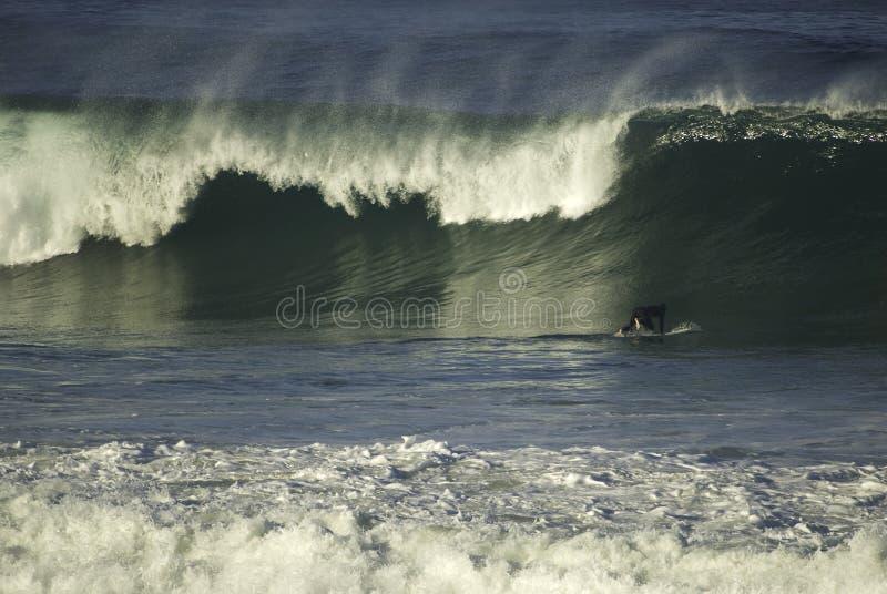 серфер стоковая фотография
