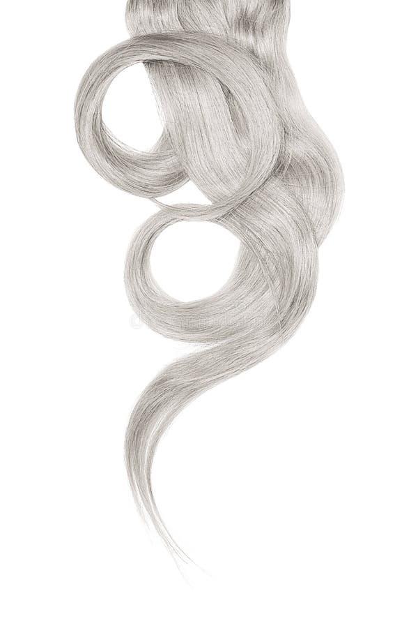 Серые волосы изолированные на белой предпосылке Длинный красивый ponytail в форме круга стоковое изображение