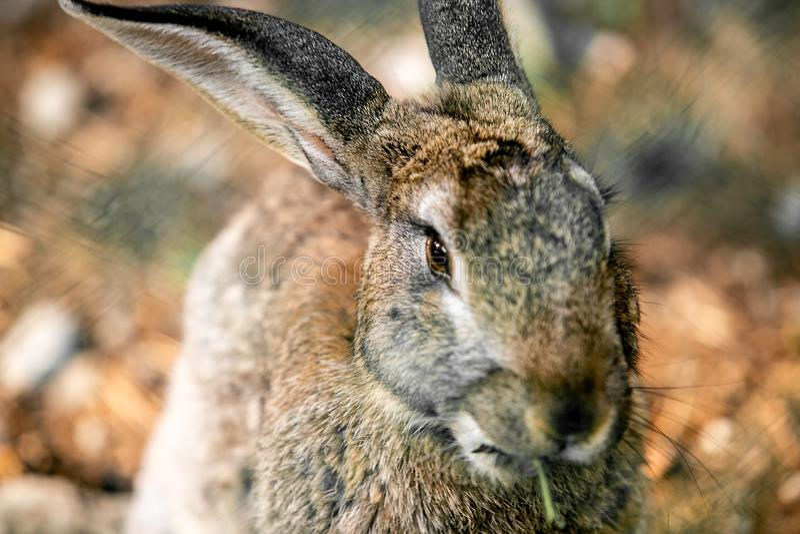 Серые зайцы в зеленой траве стоковая фотография