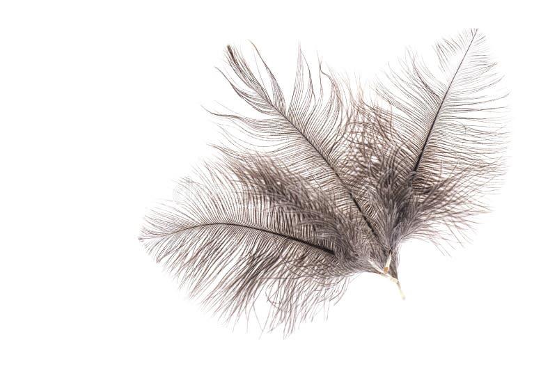 Серые пер страуса стоковые изображения