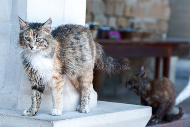 Серый бездомный котенок, стоковое фото rf