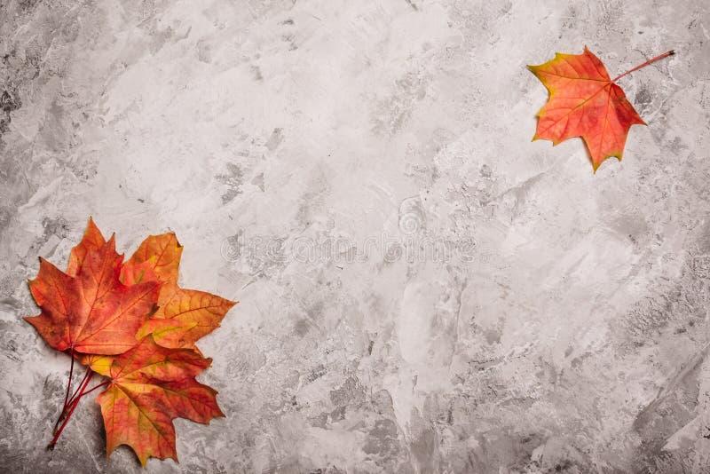 Серый бетон с кленовыми листами и взгляд сверху стоковые фото