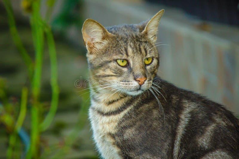 Серый играть главные роли кота стоковые изображения rf