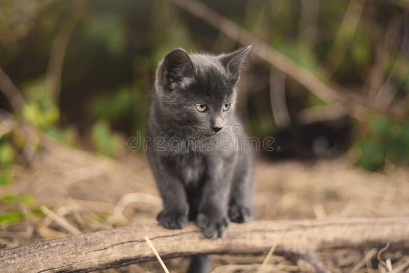 Серый котенок внешний стоковое фото