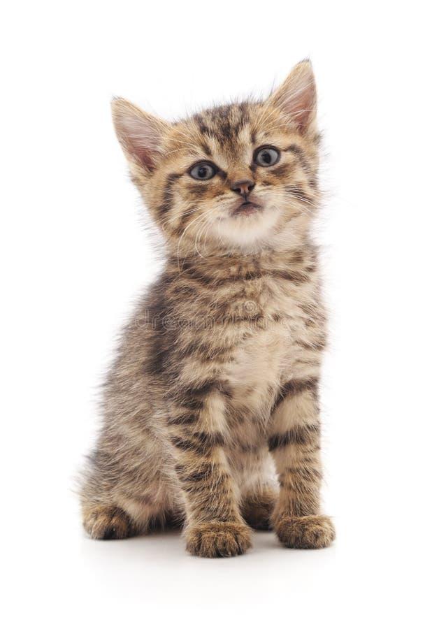 серый котенок малый стоковые изображения