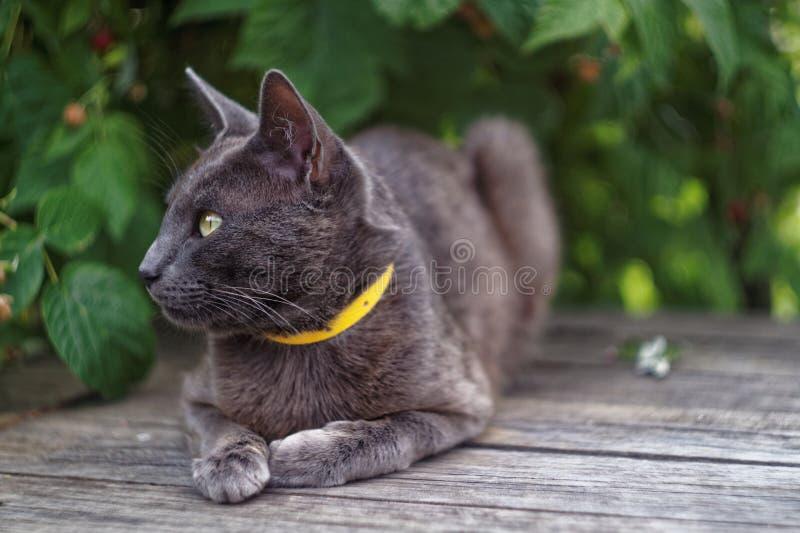 Серый кот лежа на коробке стоковые фотографии rf
