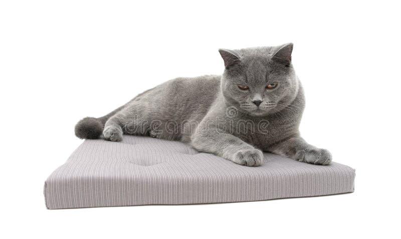 Серый кот лежа на подушке изолированной на белой предпосылке стоковые фотографии rf
