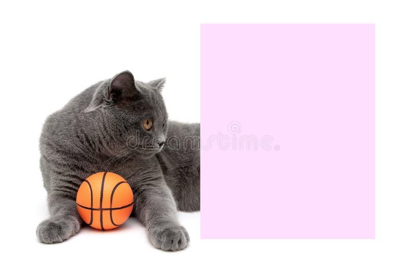Серый кот при шарик лежа около знамени стоковое фото