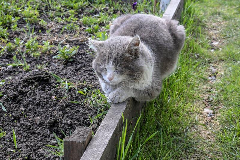 Серый кот спать на доске в саде стоковые фотографии rf